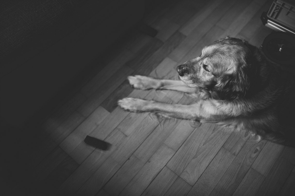your story photo-family photographer-rainy days with a golden retriever